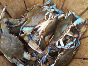 Basket of Maryland Blue Crabs