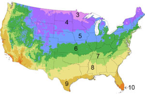 Plant growing zones of the United States