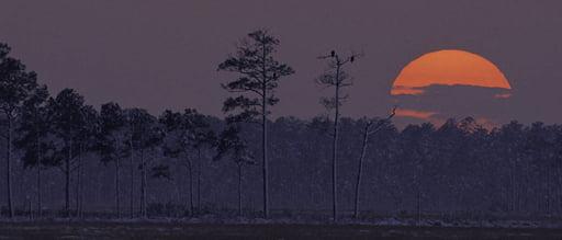 Photo of Blackwater Wildlife Refuge taken from NPS website.
