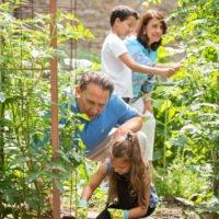 Owners' Garden
