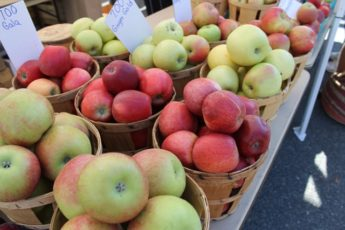 Apples at the Rockville Farmers Market